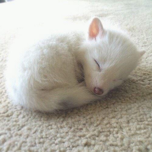 すやすや昼寝をする小動物