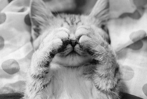 明るくて眠れない猫