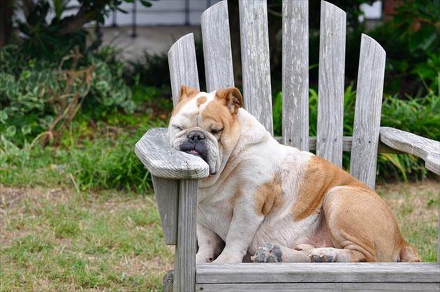 硬いイスで昼寝する犬
