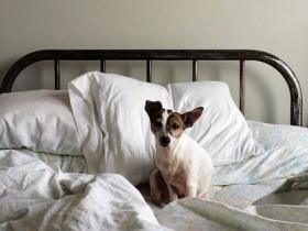 早朝に起きた犬