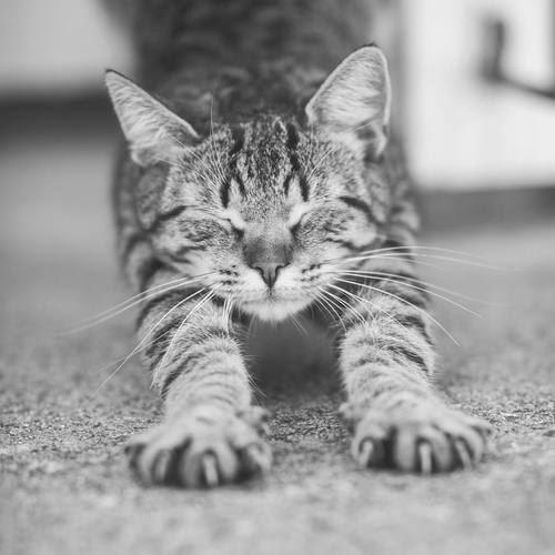 眠そうに伸びをする猫