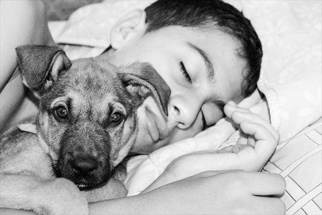 飼い主と一緒に眠る犬