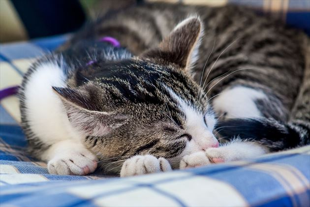 ぐっすり眠る猫