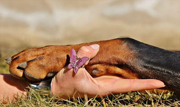 繋いだ人間と犬の手