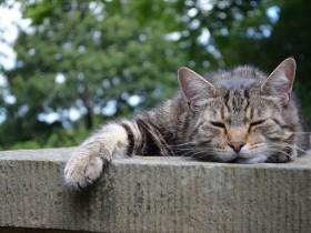 眠くて寝そうになっている猫