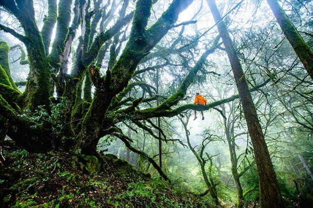大自然の森の大木に座る男性の画像