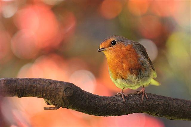 大自然の中で鳴く野鳥の画像1