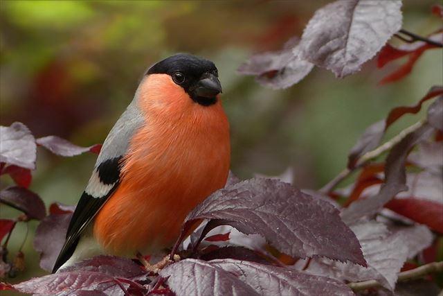 大自然の中で鳴く野鳥の画像2