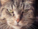 イライラが抑えられない表情の猫の画像