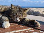 眠さに耐えられず眠る猫の画像