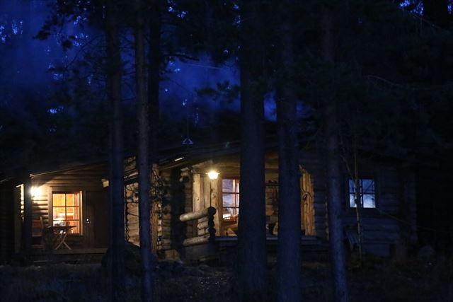 夜の森の画像1