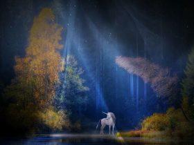 夜の森の画像2